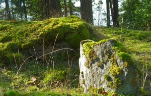 Moss covered rocks on Orcas Island