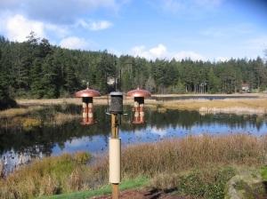 Otter's Pond