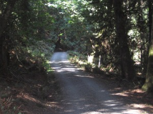 county road on stuart island