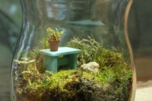 Sandi Friel's moss terrarium