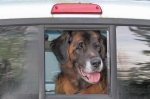 Murphy in his pickup truck