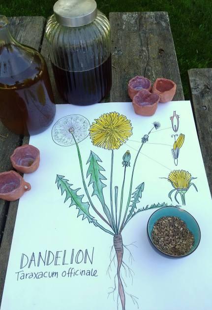 Colleen dandelion