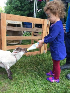 Feeding baby lambs is such a treat!