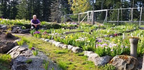 Charlie Carver's Iris Garden on Orcas Island