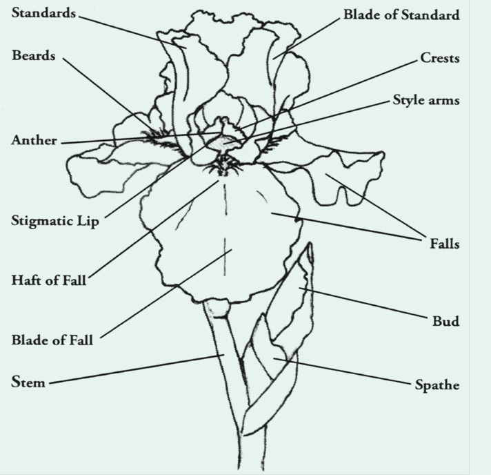 Parts of an iris flower